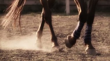 Legs of a brown horse — Stock Video