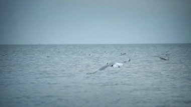 Seagulls flying midair over blue sky — Stock Video