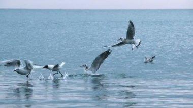 Seagulls flying midair — Stock Video