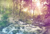 Forest waterfall and rocks — Stock Photo
