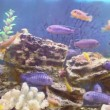 Many different fishes swim in aquarium — Stock Video #60016623
