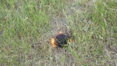 Grass burns with smoke — Stock Video