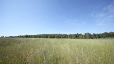 Panorama of high grass in field — Stock Video