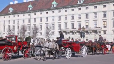 Carriages with tourists in Vienna — Stock Video