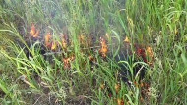 Dry grass burns — Stock Video