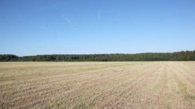Panorama of field — Stock Video