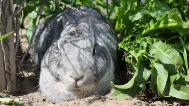 Rabbit sits in grass — Stock Video
