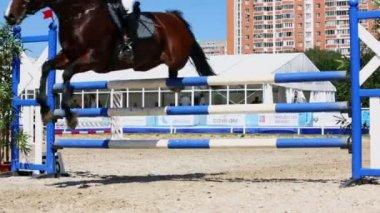 Rider on horse knock down bar — Stock Video