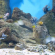Fish and coral in watertank — Stock Video #65786639