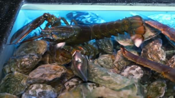 Crayfish in water of aquarium — Vídeo de stock