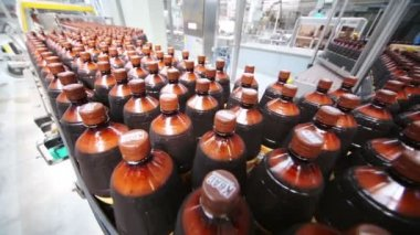 Many beer bottles on production line — Stock Video