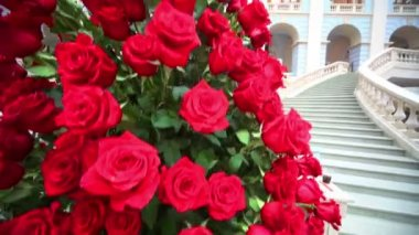 Big beautiful bouquet of red roses — Stock Video