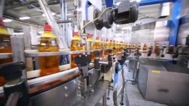 Bottles of fresh light beer on conveyor — Vídeo stock