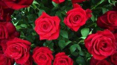 Large beautiful bouquet of red roses — Stock Video