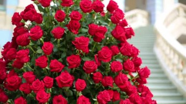 Beautiful large bouquet of red roses — Stock Video