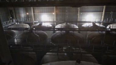 Big cisterns for beer in large premises — Stock Video