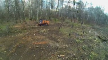Clearance of wood from felling debris — Stock Video