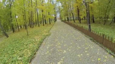Park alley among trees with colorful foliage — Stock video