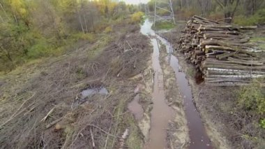 Cleaning swath from felling debris near power lines — Stock Video