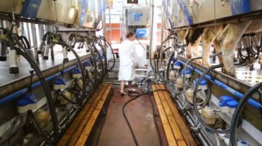 Young woman near milking equipment — Stock Video