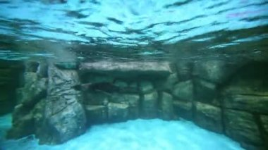 Swimming fur seals at oceanarium — Stock Video