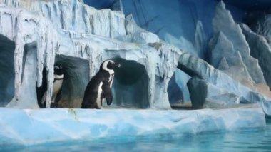 Penguins in decorative cave at oceanarium — Stock Video