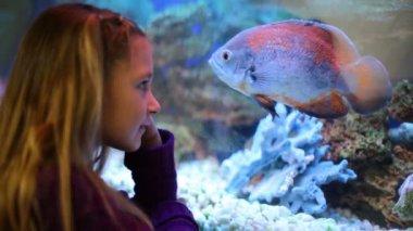 Little girl looks at aquarium — 图库视频影像