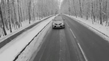 Car drives by road among trees — Stok video