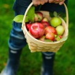 Organic apples in a basket — Stock Photo #54699923