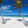 Coconut palms at beach — Stock Photo #55885223