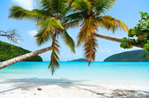 Beautiful tropical beach at Caribbean — Stock Photo