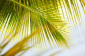 Fresh green palm tree leaves — Photo