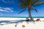 Palma de coco en la playa — Foto de Stock