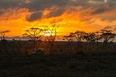 Morning safari drive — Stock Photo