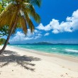 Beautiful tropical beach at Caribbean — Stock Photo #58740599