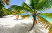 Beautiful tropical beach at Caribbean — Stok fotoğraf