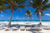 Coconut palm at beach — Stock Photo
