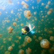 Tourist snorkeling in Jellyfish Lake — Stock Photo #66995529