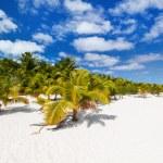 Praia tropical deslumbrante na exótica ilha no Pacífico — Fotografia Stock  #80873988