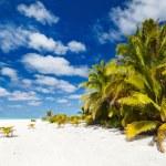 Praia tropical deslumbrante na exótica ilha no Pacífico — Fotografia Stock  #80874024