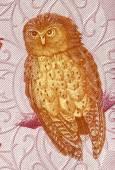 Serendib Scops Owl — Stock Photo