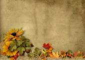 Background with   autumn decorations — Stock Photo