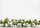 Border of apple blossoms — Stock Photo