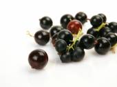Ripe currant berries — Stock Photo