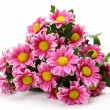 Pink chrysanthemums — Stock Photo #54161243