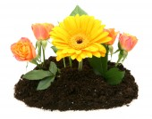 Flowers in ground — Stock Photo
