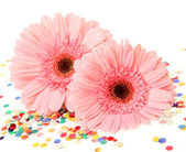 Pink gerberas   with multicolored confetti — Stockfoto