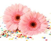 Pink gerberas   with multicolored confetti — Stock fotografie