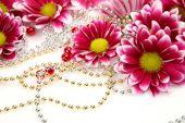 Pink chrysanthemums — Stock Photo