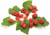Ripe berries — Stock Photo